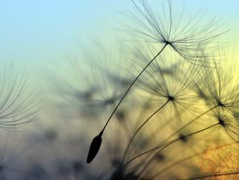 Entre culpabilité et responsabilité, la voie de la liberté