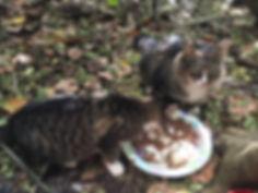08 feeding kikky.JPG