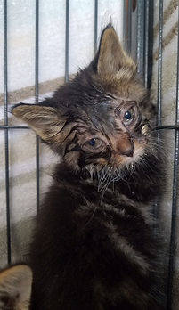 Sick kitten.jpg