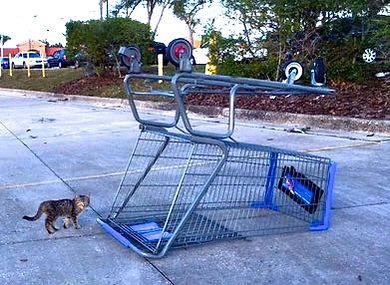 05 Kitten in parking lot.jpg