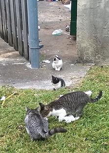 Kittens by dumpster.JPG