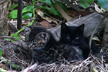 Front page kittens.jpeg