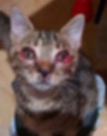 07 kittens w herpes.jpg