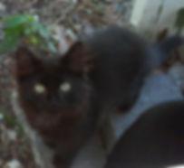 Front page black kitten.jpg