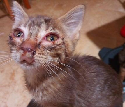 07 sick kitten.jpg