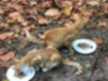 Yellow cats feeding.JPG