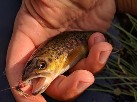 Le 11 Mars est presque là ! Alors pensez à vos cartes de pêche !