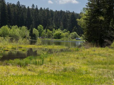 Petite mise en plie des étangs de St Régis