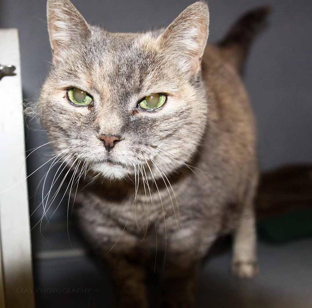 Sweet senior kitty Tats, now called Embers