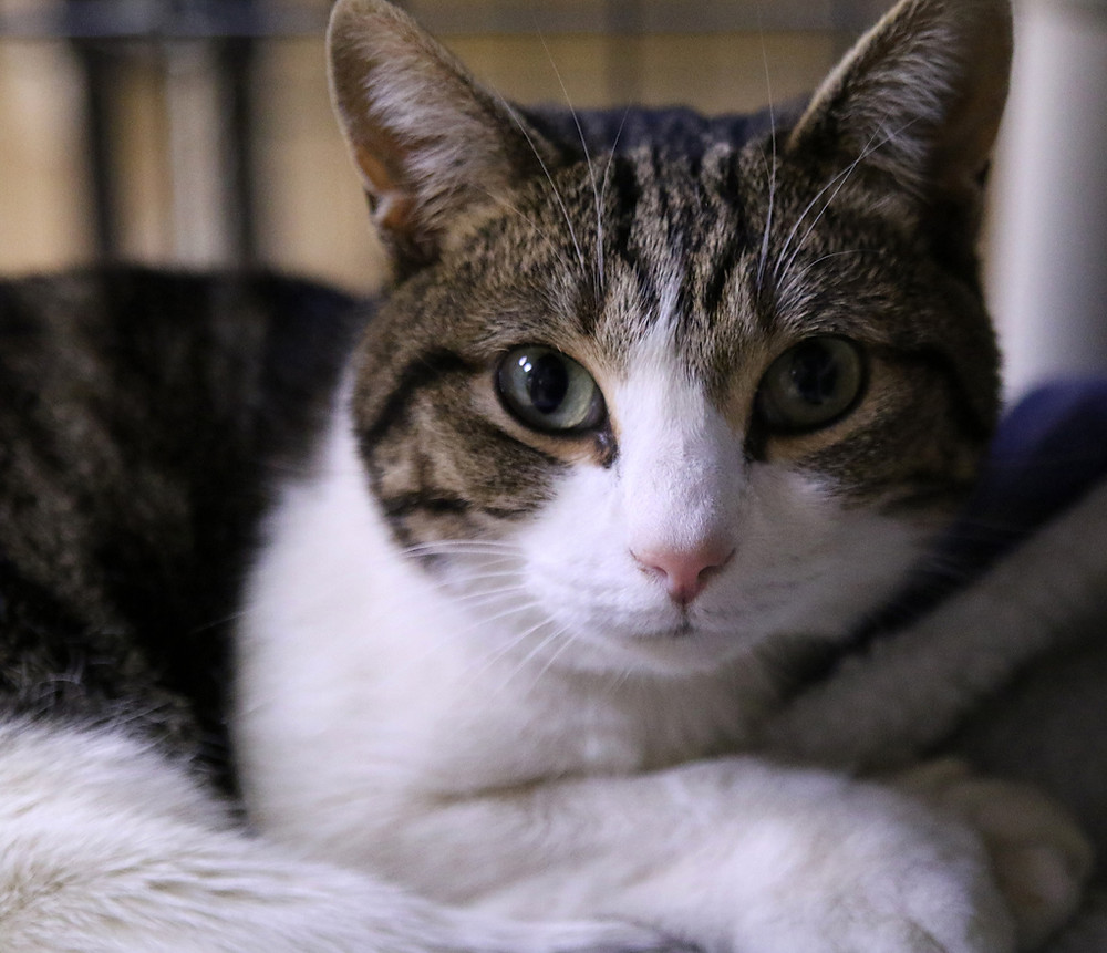 Bambi, a very special kitty looking for a home