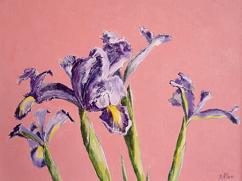 Irises on Pink by Susan Allen