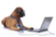 a.baa-Dog-On-Computer.png