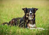 canine rehab, canine physio, working dog physio