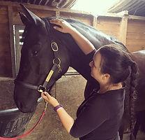 equine rehab, equine physio, derbyvetphysio