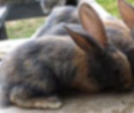 DerbyVetPhysio, small animal Physio