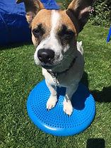 derbyvetphysio, canine rehab, canine physio, canine core strength
