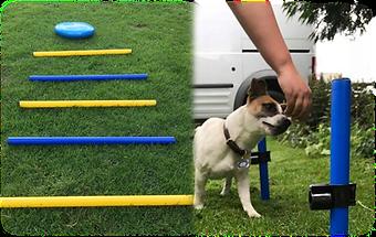 canine rehab, canine pole work, canine weaving exercises