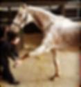 horse forelimb stretch, protraction stretch, derbyvetphysio