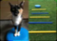 cat physiotherapy, feline physiotherapy, wobblecushion, Derbyshire Vet Physio, DerbyVetPhysio,