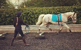 derbyvetphysio, equine rehab, equine physio