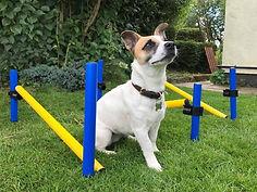 derbyvetphysio, canine physio, canine rehab