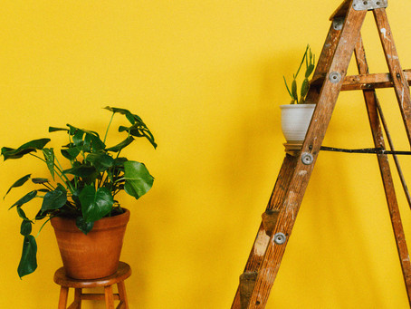 How I Care for All My Houseplants in 10 Minutes