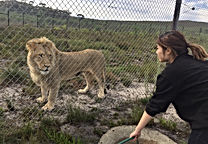 lion3.jpeg