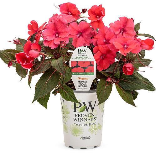 Proven Winners Sunpatiens Compact Deep Rose