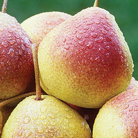 Pear - Summercrisp