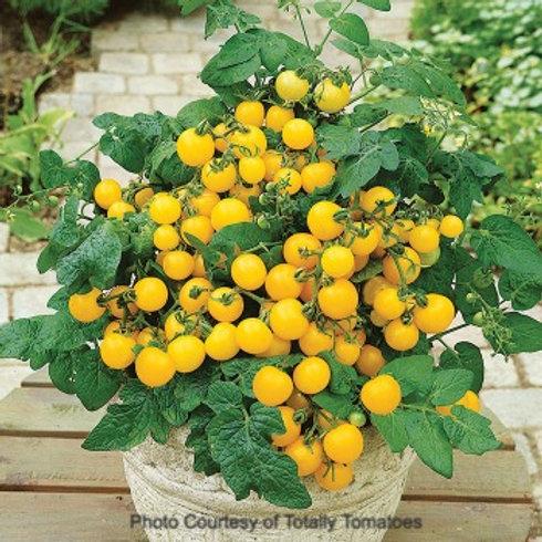 Tomato - Patio Choice Yellow Hybrid