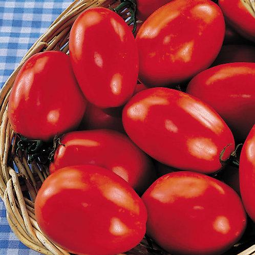 Tomato - Paisano
