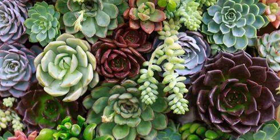 Make & Take Succulents Planter