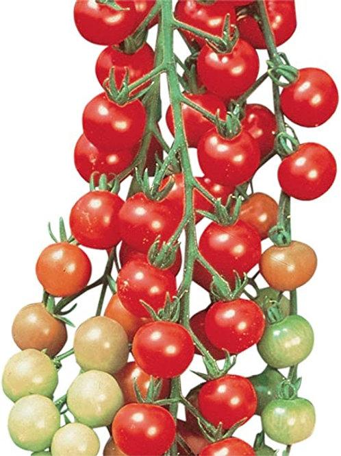 Tomato - Sweet 100 Cherry