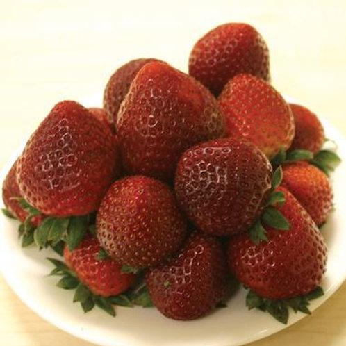 Strawberry - Honeoye (June)