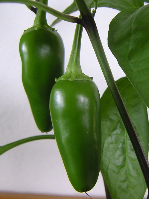 Pepper, Hot - Jalapeno