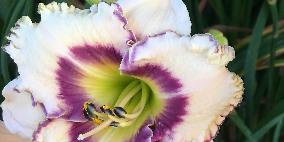 Daylily Bloomfest