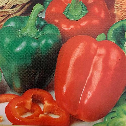 Pepper, Sweet - California Wonder