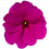 Sunpatiens Compact Purple