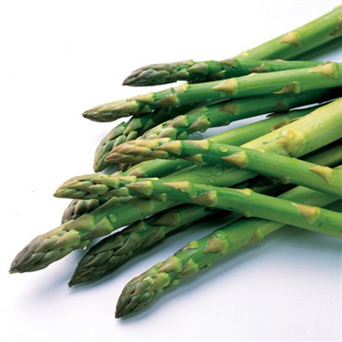 Asparagus - Jersey Knight