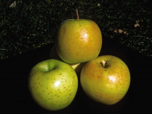 Apple - Honeygold