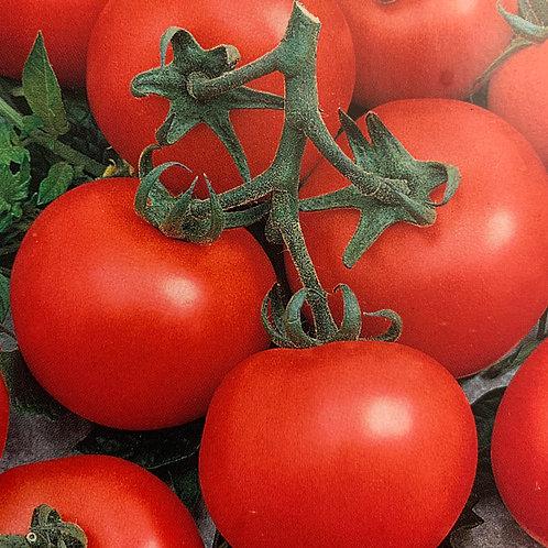 Tomato - Better Boy