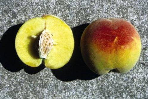Peach - Contender