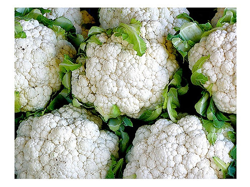 Cauliflower - Self Blanche