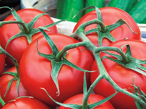 Tomato - Early Girl