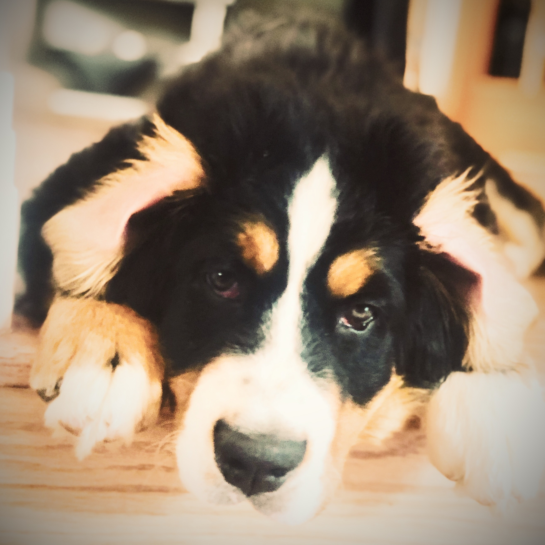 Dog Walking-New Puppy Visits