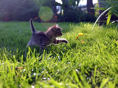 Pierwsze Koty Za Płoty