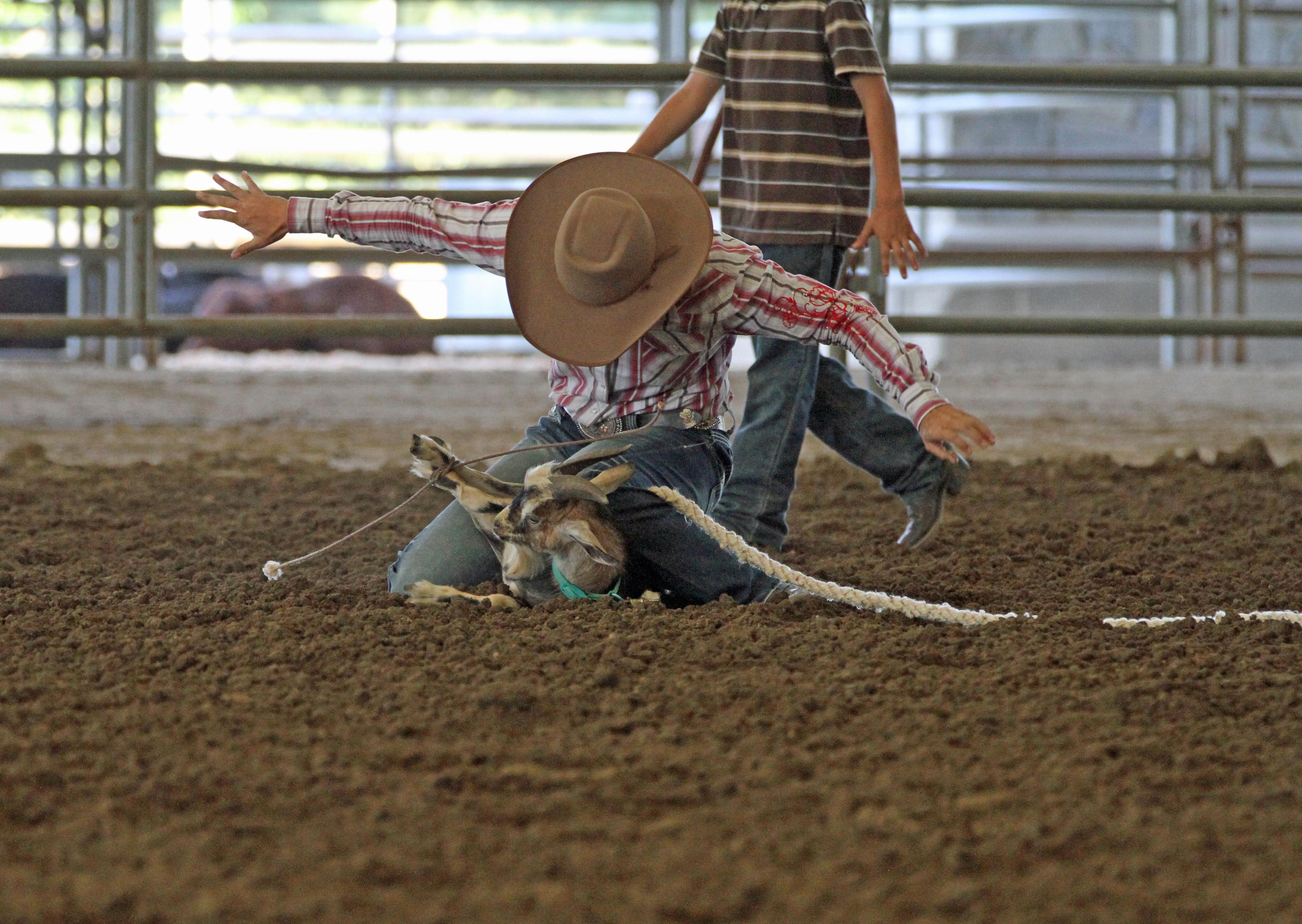 6327 Goat Tying