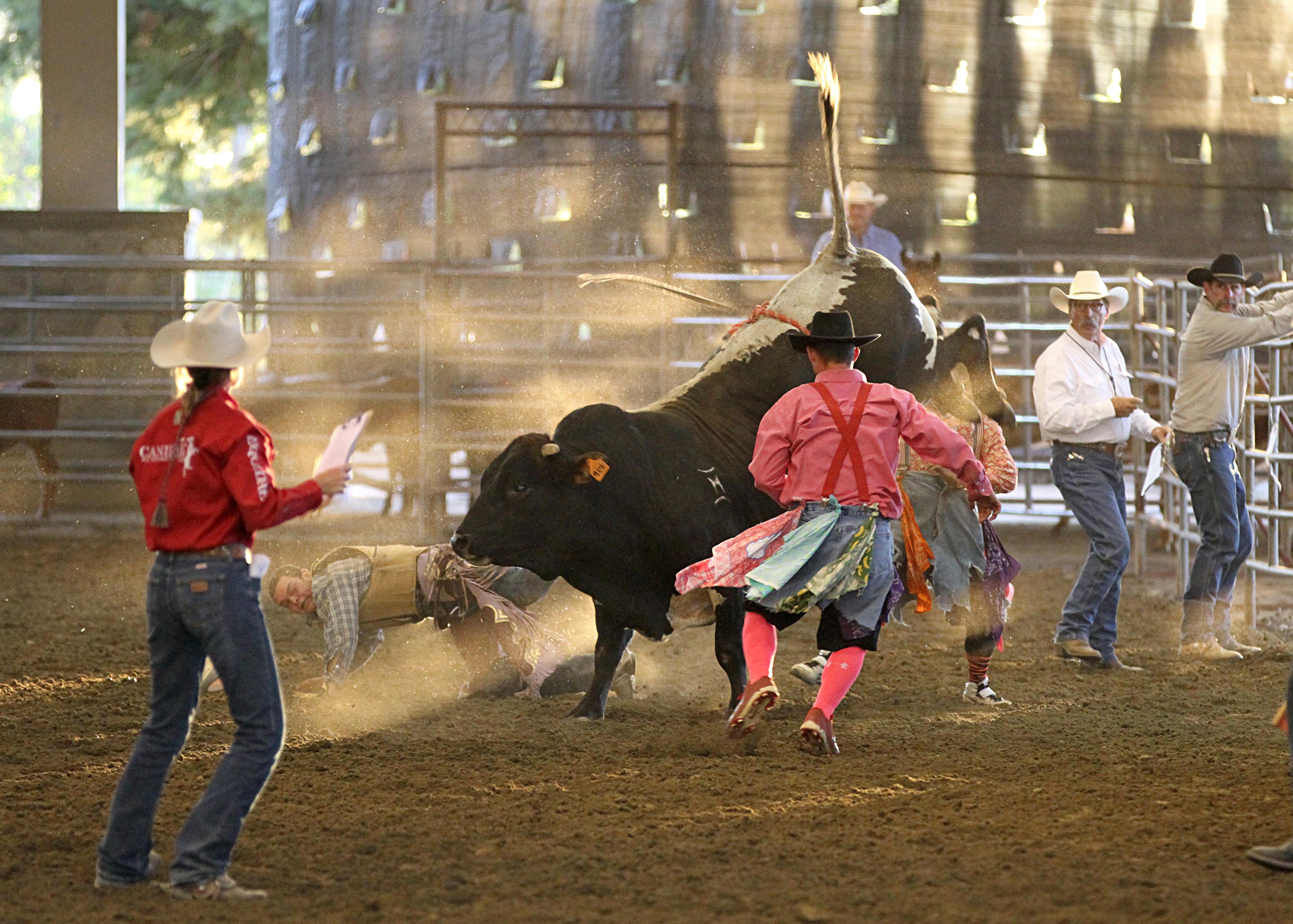 4311 Bulls-Rough Stock