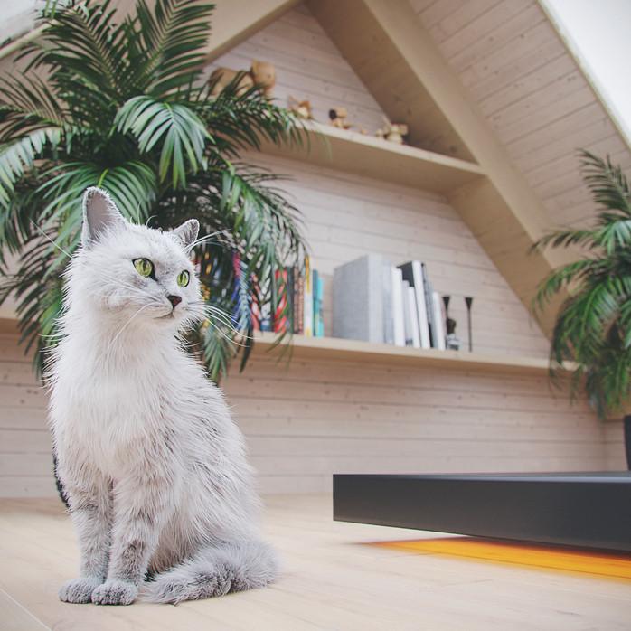 CGI- Cabin Pet