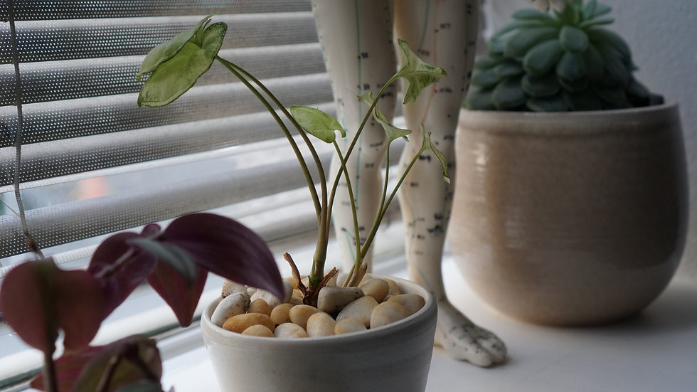 plants and model no peepee.jpg